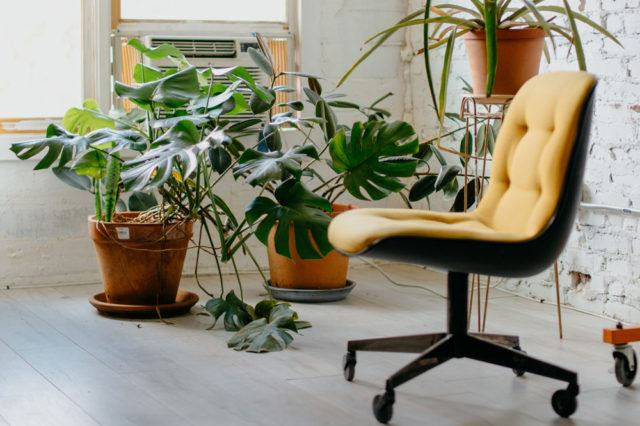 a yellow office chair next to green plants